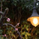 南林間6丁目桃の花と灯りです