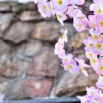 西鶴間1丁目 造花の桜です