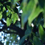 西鶴間8丁目 大和斎場 緑の葉にさす朝日です