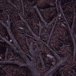 鶴間公園 木の根が描いたアートです