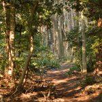 下鶴間4437-8 つるま自然の森です