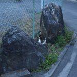 中央林間西1丁目 信仰の対象とされている石です