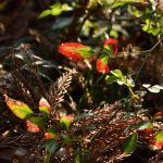 下鶴間4437-8 つるま自然の森 鮮やかな色の葉です