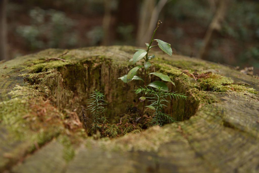 下鶴間4437-8 つるま自然の森 切り株の中の小宇宙です