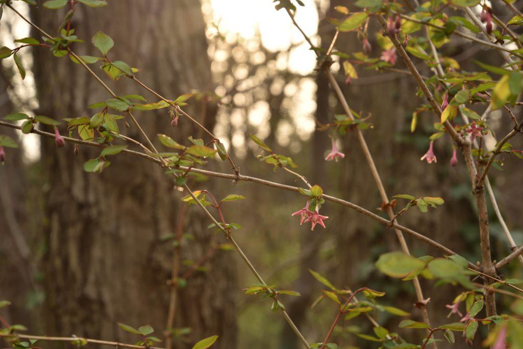 上鶴間8丁目 東林ふれあいの森 朝日とピンクの小さな花です