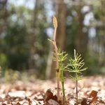 泉の森 春の日差しに顔を出した植物です