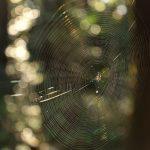 下鶴間4437-8 つるま自然の森 光をまとって輝くクモの巣です