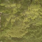 座間谷戸山公園 水鳥の池に映る木々です