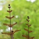 座間谷戸山公園 天に向かって手を広げる植物です