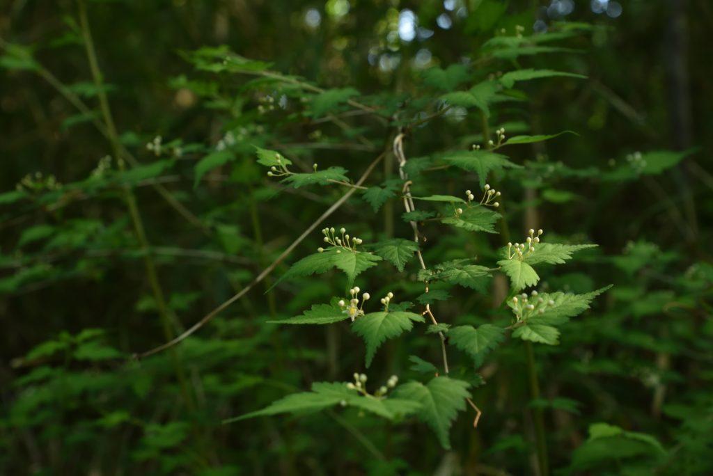 座間谷戸山公園 葉の上に遊ぶ小人たちです