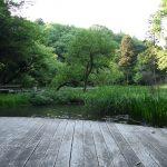 座間谷戸山公園 わきみずの谷です