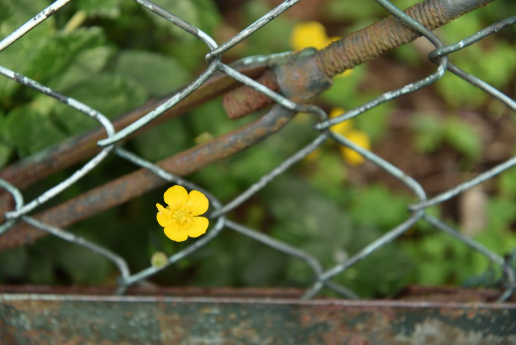 南林間9丁目ハードボイルド風に撮ってみた花の写真1