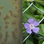 南林間9丁目ハードボイルド風に撮ってみた花の写真2