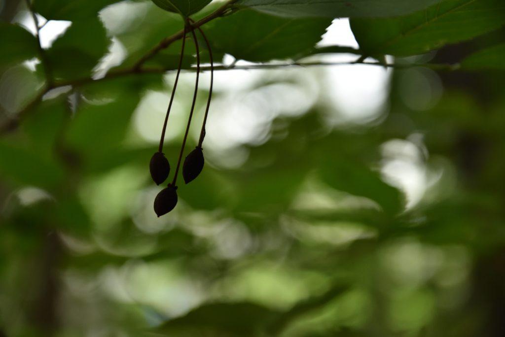 下鶴間4437-8 つるま自然の森 風にそよぐ木の実