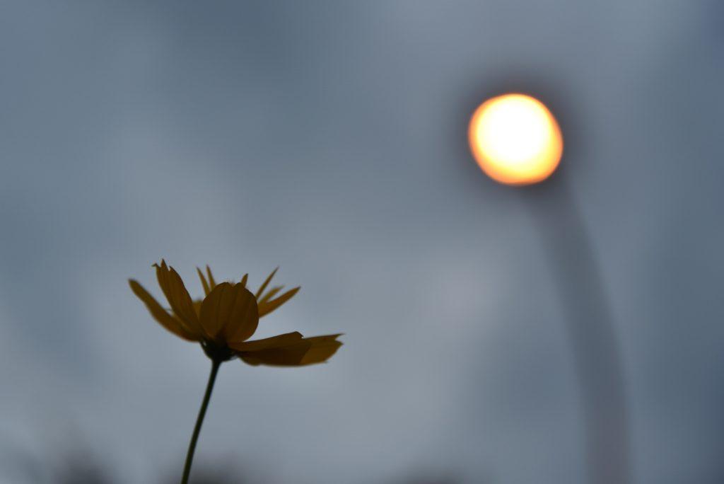 南林間 夏の日の街路灯と花です