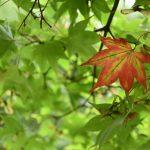 大山ケーブル駅付近で見つけた秋です