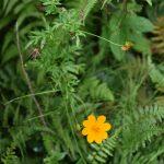 座間谷戸山公園 秋の野の花