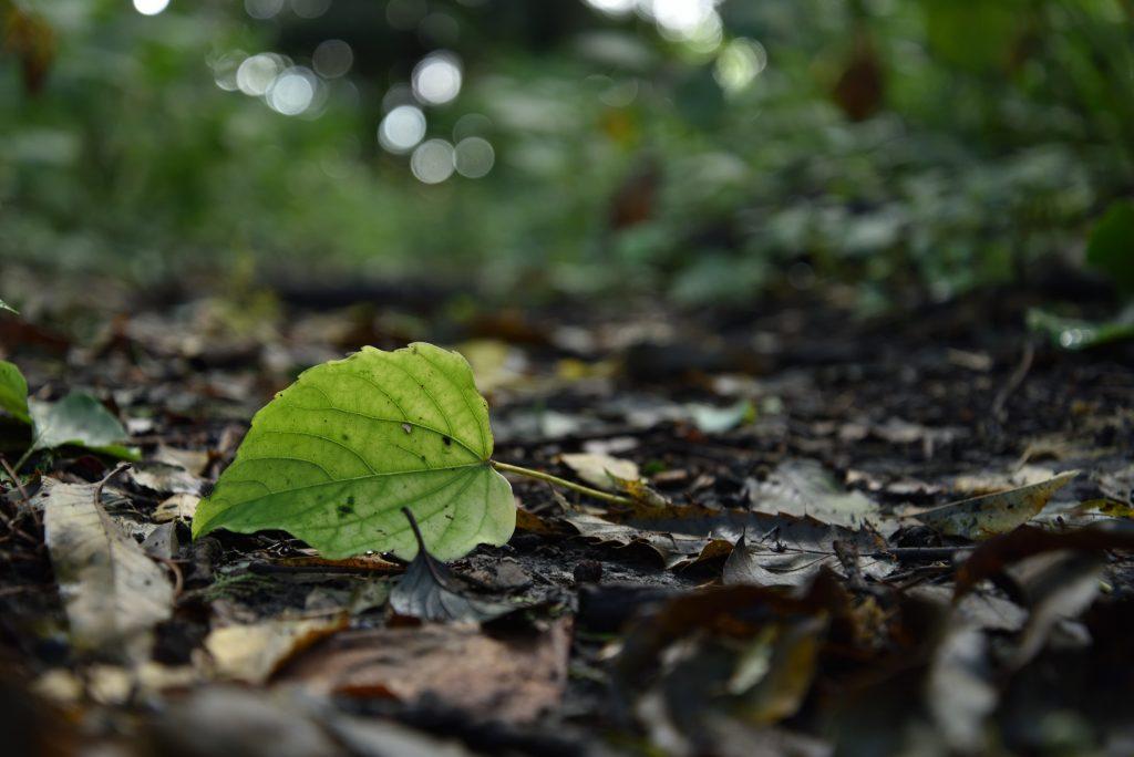 つるま自然の森 深まりゆく秋です