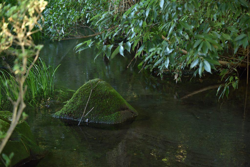泉の森 2017年10月9日 小川と苔むした石です