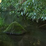 泉の森 2017年10月9日 小川し苔むした石です