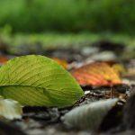 泉の森 2017年10月10日 木々の葉も色づき始めました
