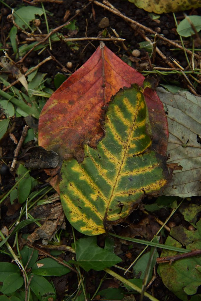 つるま自然の森 2017月10月24日 色とりどり