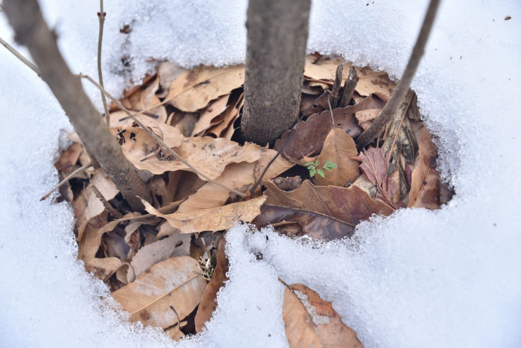 つるま自然の森 2018月1月26日 雪解けの窓