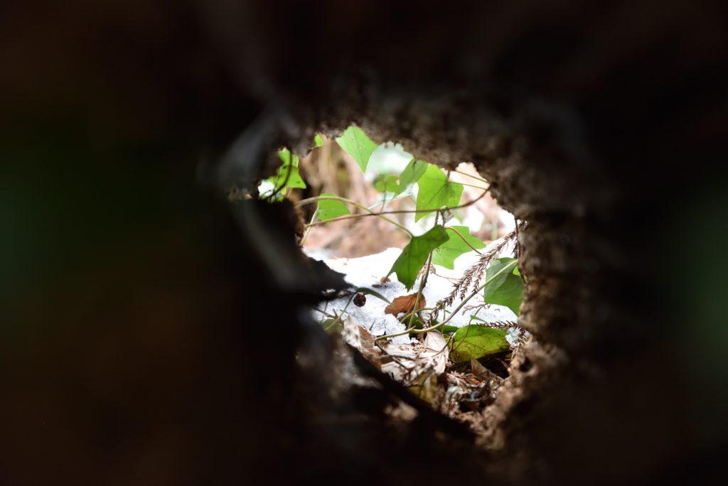 つるま自然の森 2018月1月26日 トンネルを抜けると雪国