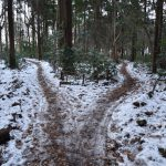 つるま自然の森 2018月1月26日 雪の分かれ道