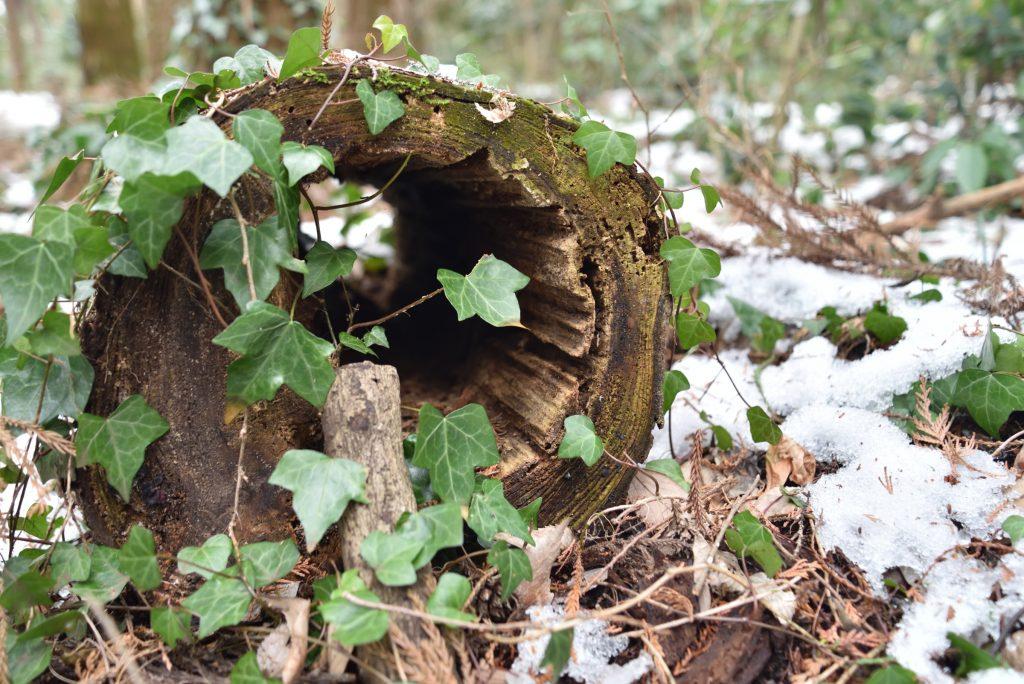 つるま自然の森 2018月1月26日 トンネルの奥に