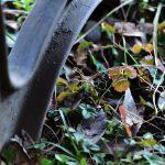 泉の森 ベンチの下のカラフルな植物です