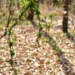 つるま自然の森 ツルが作った自然のオブジェです