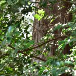 つるま自然の森 春の日差しに輝く葉です