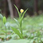 泉の森の黄色い花です