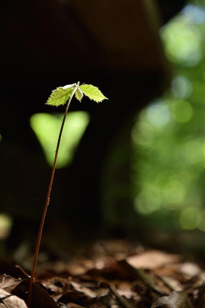 つるま自然の森 2018月5月4日 ベンチの下の若木です