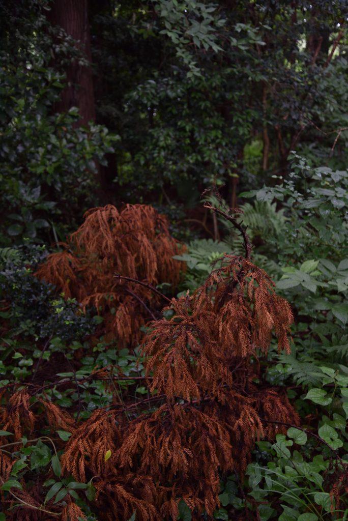 2018年6月17日 つるま自然の森 赤い森です