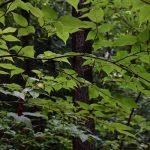 2018年7月12日 つるま自然の森 雨上がりのアーケードです