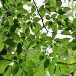 2018年7月12日 つるま自然の森 緑の葉と光と影です