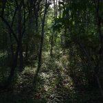 2018年8月18日 東林ふれあいの森 森に差し込む朝の日差しです