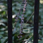 2018年8月18日 東林ふれあいの森 鉄パイプと紫の植物です