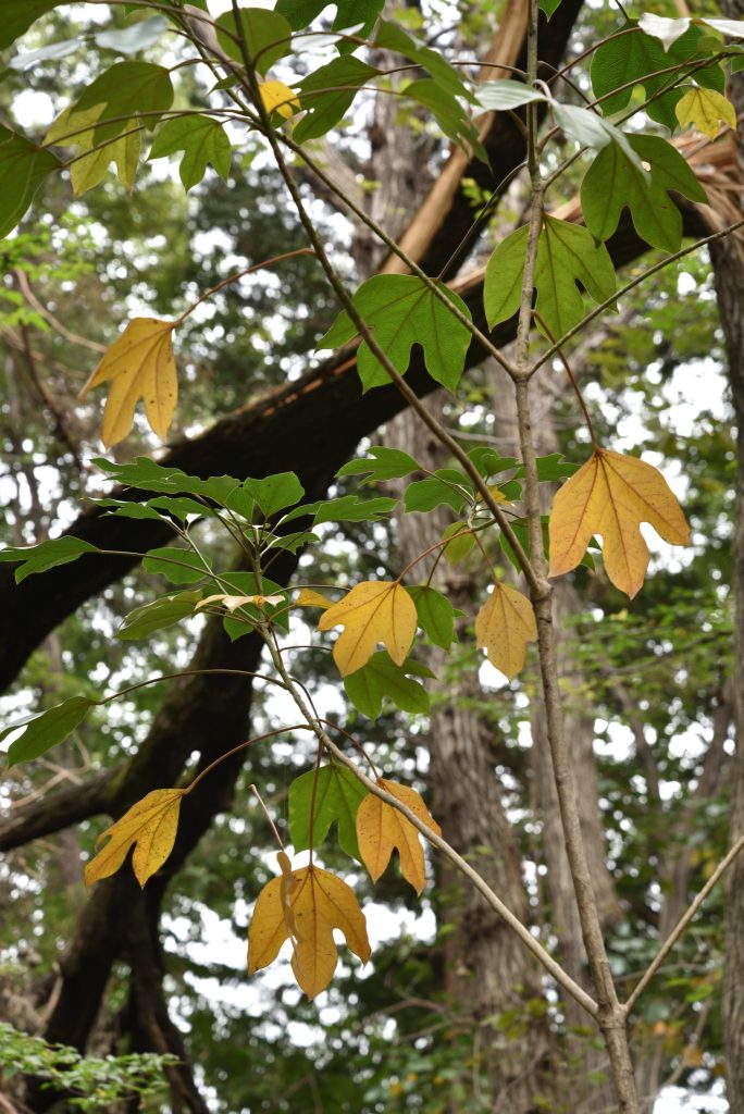 2018年10月26日 東林ふれあいの森 秋色の葉