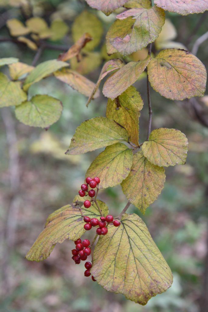 2018年10月26日 つるま自然の森 秋の実り